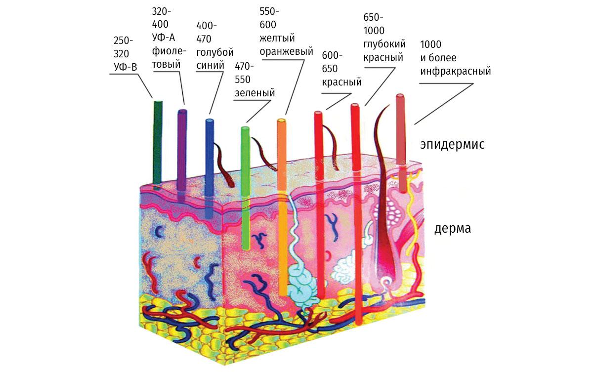 Лазерная эпиляция. Схематическое изображение различной глубины проникновения излучения в кожу в разных диапазонах длин волн