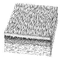 Мимические морщины - изменение текстуры кожи А