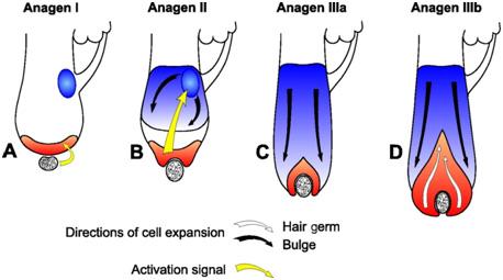 Нежелательные волосы на руках и ногах - изменение волосяного фолликула